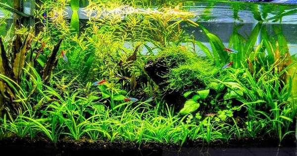 cara membuat aquscape tanpa CO2 dan filter peluang bisnis yang mudah