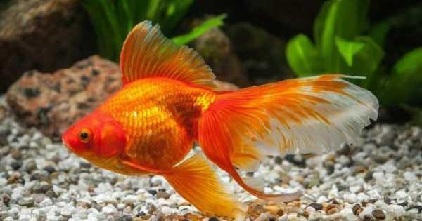 Ikan yang Tidak Boleh di Aquascape