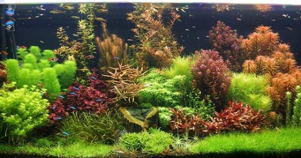 Tanaman Aquascape Di Sekitar