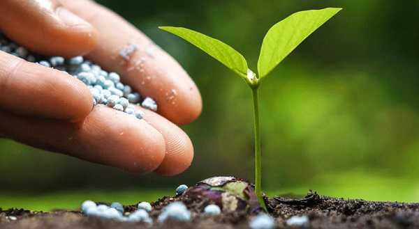 memberi pupuk dan nutrisi pada tanaman hias
