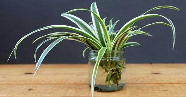tanaman hias mini dalam ruangan - 2021