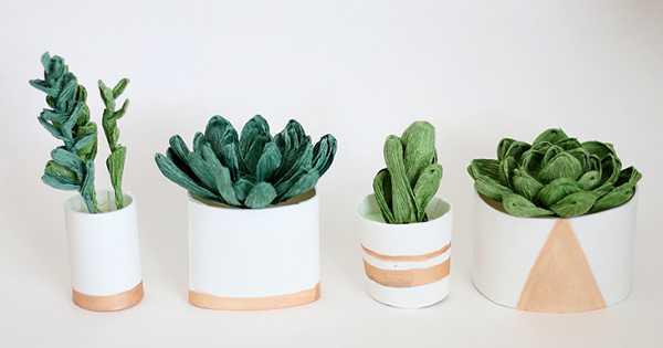 sukulen tanaman hias mini dalam ruangan