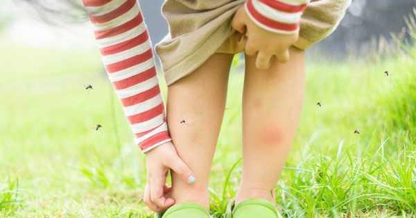 10 Tanaman Pengusir Nyamuk yang Ampuh dan Gampang Ditanam