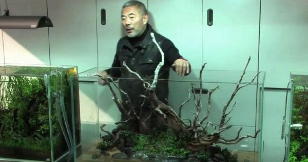 Cara Membuat Aquascape Iwagumi