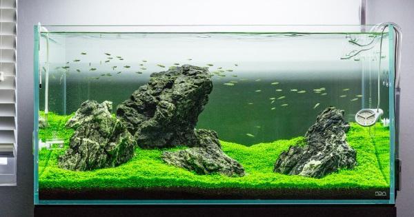 cara membuat aquascape iwagumi untuk pemula- level advance